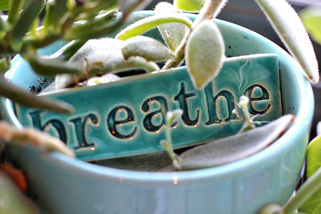 Incription Breathe dans un pot de plante